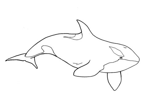 whale clipart black and white killer whale clipart black and white www pixshark