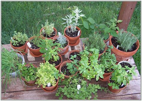 Container Herb Garden Ideas Herb Garden Design Plan Herb Garden Design