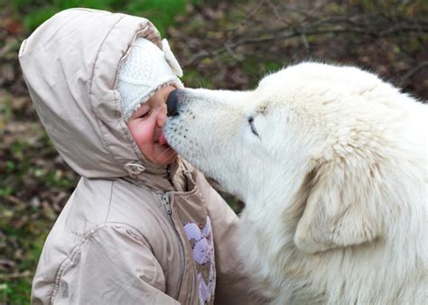 sepsis in dogs kisses could cause deadly sepsis