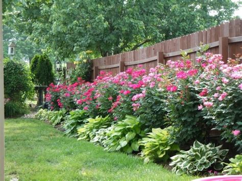 Fence Landscaping Ideas Landscape Landscaping Ideas For Knockout Roses
