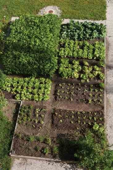 Plant Rotation In Vegetable Garden Small Scale Crop Rotation Inspired Vegetable Gardening