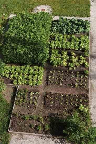 Crop Rotation Home Vegetable Garden Small Scale Crop Rotation Inspired Vegetable Gardening
