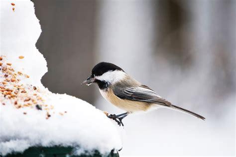 scheune elmshorn speisekarte vogel im garten bestimmen 28 images vogel im garten