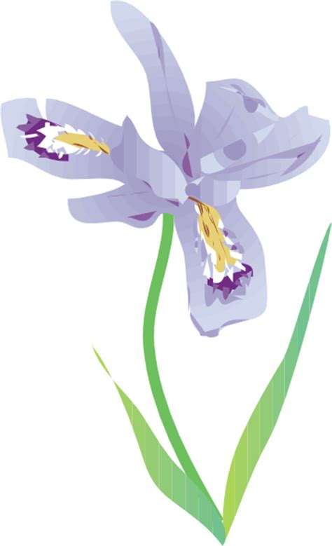 dwarf lake iris clip art at clker com vector clip art