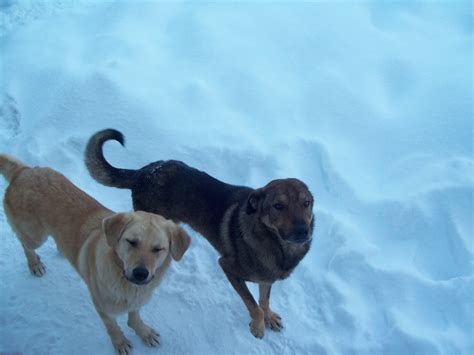 breeders in dogs in winter dogs photo 3489711 fanpop