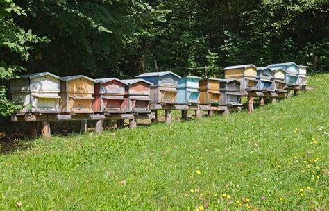 cassetta per apicoltori camion perde arnie per strada passanti attaccati da api