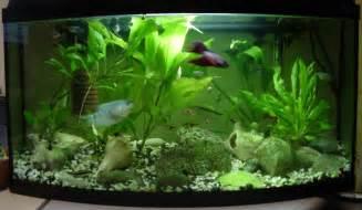 Aquarium Decorating Tips ? Decoration Ideas