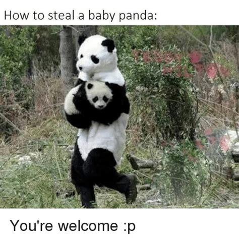 25 best memes about baby panda baby panda memes