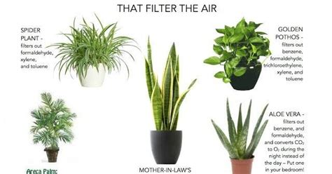 Best Humidifier For Bedroom let s breathe clean air indoor air purifying plants in