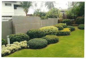 bushes for landscaping landscaping plants bbt