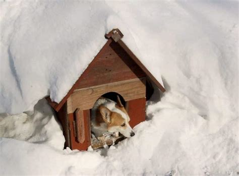 house training a shelter dog diy cold weather dog house what to know