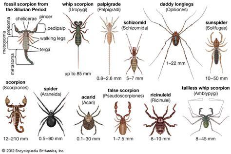 species of arachnida and myriopoda scorpions spiders mites ticks and centipedes injurious to classic reprint books longlegs arachnid britannica
