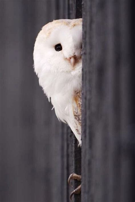 owl wallpaper for macbook 1054 best images about owls on pinterest