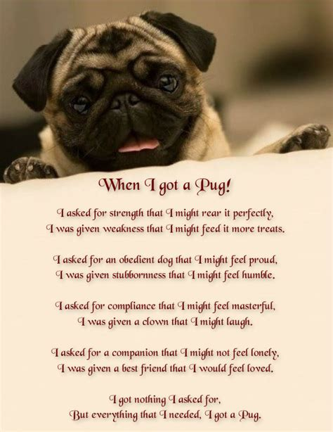 quotes on pugs pug quotes on pug puppies pugs and brindle pug