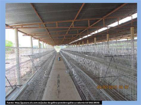 manejo de instalaciones para 8415848722 coturnicultura cr 237 a y manejo