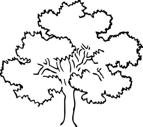 mahogany tree coloring page 193 rvores para colorir 2 desenhos para colorir imagens
