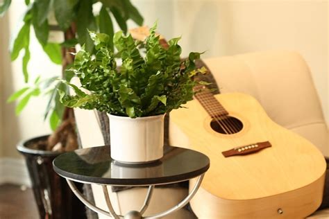 crispy wave plant  natural air purifier van belle