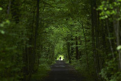 por una gentil floresta 8426374646 hoy es el d 237 a mundial del medio ambiente fotos cubadebate
