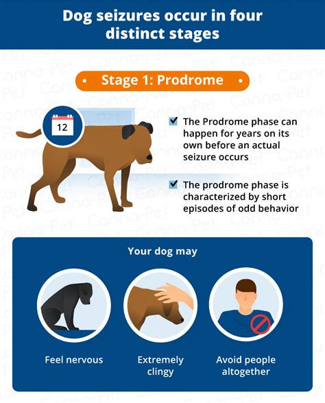 how does the puppy stage last how do seizures last canna pet