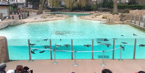 Indoor Outdoor House by Feature Top 5 Places To Spot Penguins In The Uk Kids
