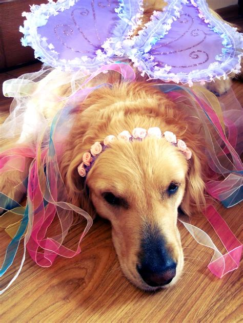 golden retriever costume costume golden retriever my dogs