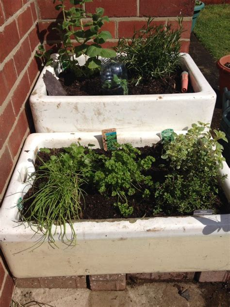 Belfast Sink Planter 1000 images about my belfast sink planter on