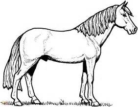 fotos caballos dibujar blous