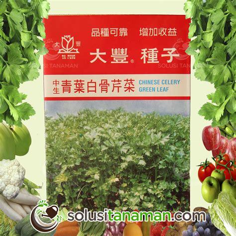 Jual Bibit Tanaman Seledri benih selada krop lettuce great alisan 10gr biji bibit