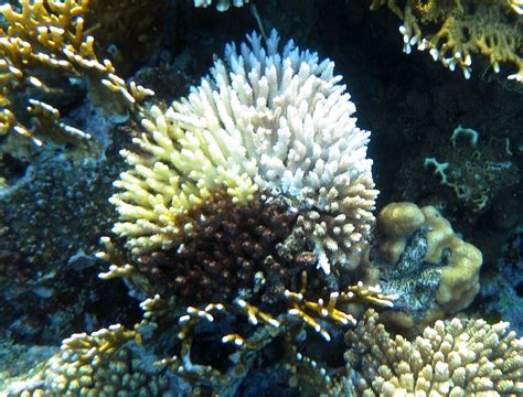 Create Own Survey - red sea snorkeling www redseasnorkeling com make your own coral survey