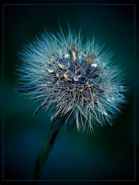 Tapis De Fleurs 942 by Obsession Blue Large Clear Photo Gorgeous