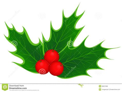 images of christmas holly leaves traditional christmas holly leaves royalty free stock