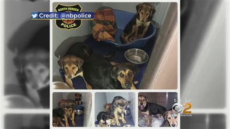high country puppy rescue high school football players help rescue puppies abandoned in cold 171 cbs new york