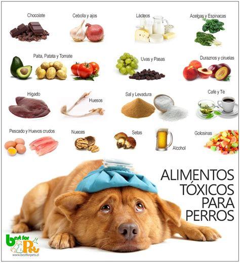 alimentos  perros nocivos  su salud mascotas