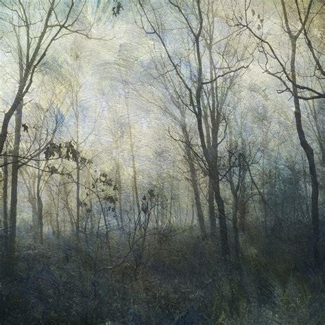 forest    art hd wallpaper wallpaper
