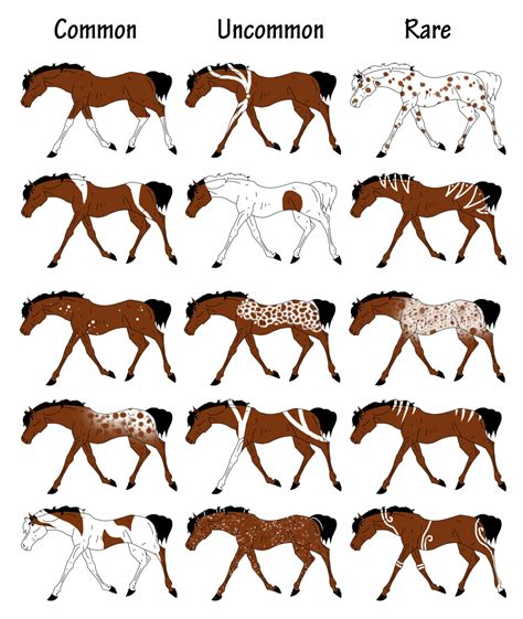 Pandori Aura Equine   Markings Chart by carlmoon on DeviantArt