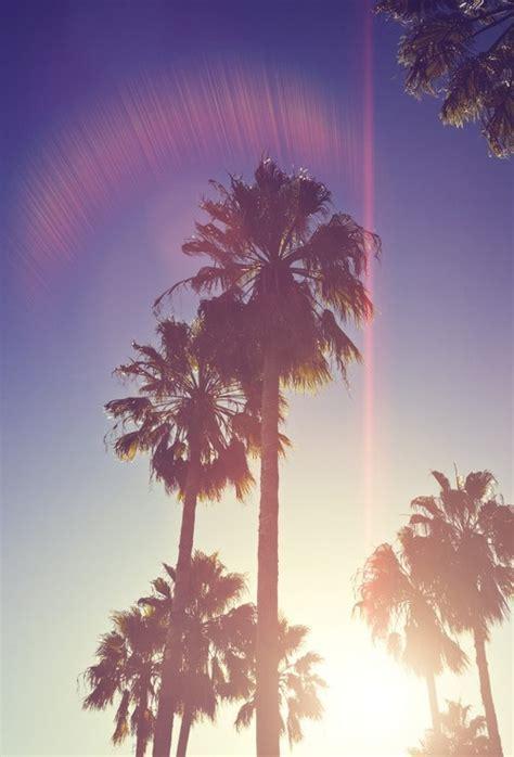 wallpaper california tumblr palm tree wallpaper tumblr