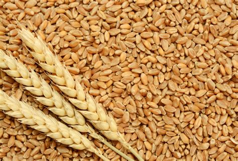 whole grains other than wheat beware of wheat it could trigger diabetes allergy