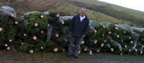 real christmas trees newport south wales real christmas