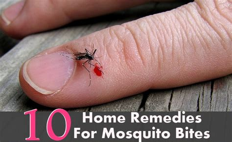 Home Remedy For Mosquitoes by 10 Home Remedies For Mosquito Bites Diy Health Remedy