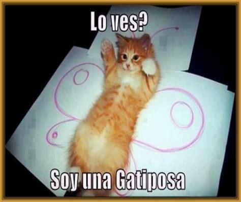 imagenes chistosos de gatos fotos con mensajes chistosos fotos con mensajes