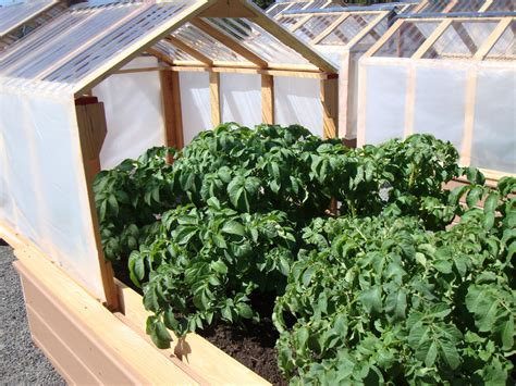 raised bed greenhouse danger garden mini greenhouses or raised beds both