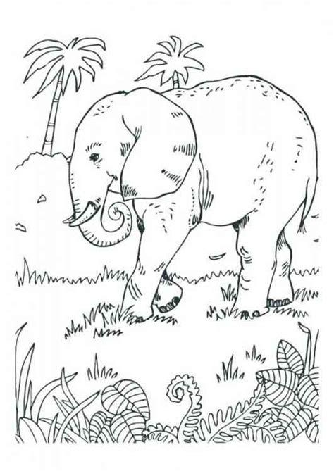 ausmalbilder tiere  ausmalen ausmalbilder