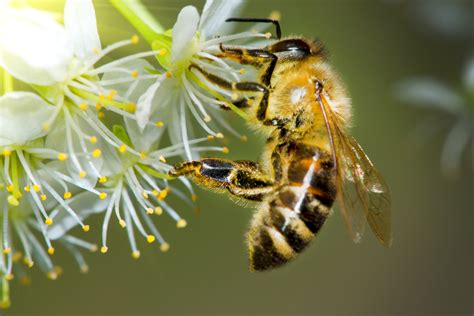 the bee all and end all why should we care that the bees