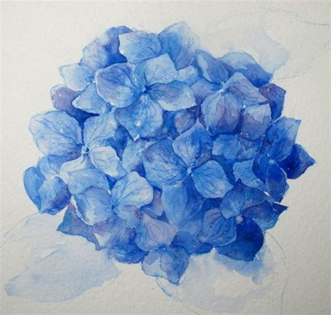 everyday artist step by step watercolor how to paint a blue hydrangea watercolors