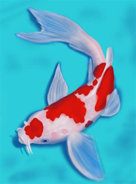 koi pond thediabeticspoon drawing realistic and stylish learn how to draw a koi fish fishes step by step
