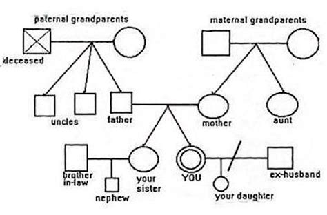 1000 images about 3 generation family genogram on