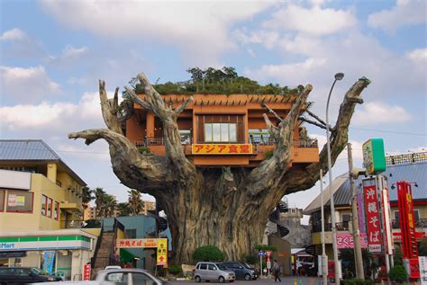 incredible houses the incredible tree house restaurant in naha japan the