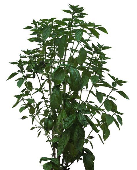 Free photo: Bush, Texture, Plant, Foliage   Free Image on