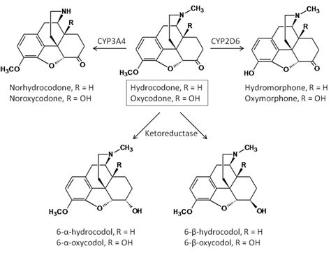 Hydrocodone Sysnthesis by Hodsdon Wiki Opiate Metabolism