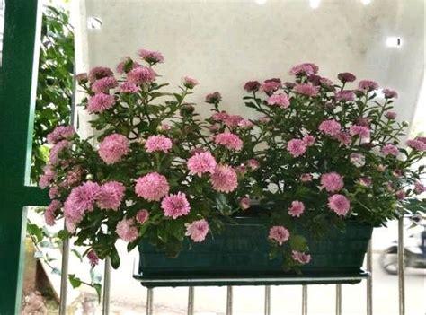 jual pot bunga plastik cantik murah  lapak shasa hijab